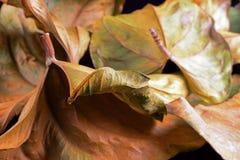 De studioschot van de herfstbladeren Stock Afbeelding