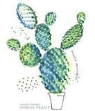 De succulente illustratie van de installatiewaterverf stock illustratie