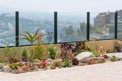 De succulente tuin van de water wijze woestijn Stock Afbeelding