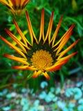 De The Sun subidas también Fotografía de archivo libre de regalías