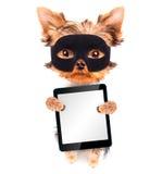 De super hond van het heldenpuppy met tabletpc Royalty-vrije Stock Foto's