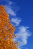 De symfonie van de herfst Royalty-vrije Stock Afbeelding