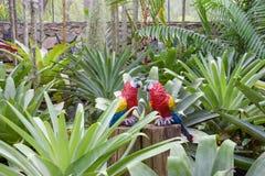 De synthetische papegaai als tuindecoratie in de tropische tuin van Nong Nooch in Pattaya, Thailand Royalty-vrije Stock Fotografie