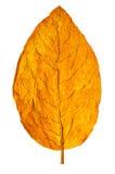 De tabak van de pijp Royalty-vrije Stock Foto's