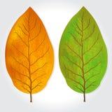 De tabak verlaat vectorillustratie Royalty-vrije Stock Afbeeldingen