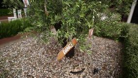 De tablet` Dans ` op een olijfboom Zie mijn andere werken in portefeuille stock videobeelden