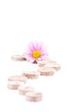 De tabletten van de turf en een bloem. Royalty-vrije Stock Afbeeldingen
