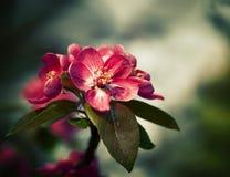 De tak met de lente bloeit bloesems Stock Fotografie
