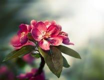 De tak met de lente bloeit bloesems Stock Foto