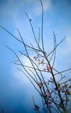 De tak met roze sakura komt bloemen tot bloei Natuurlijke achtergrond bij hooglanden Royalty-vrije Stock Foto's