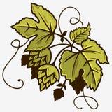 De Tak van de bierhop met Bladeren Grafische vector Royalty-vrije Stock Foto