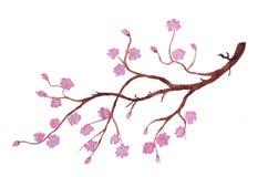 De tak van bloeiende kersenbloesem vector illustratie