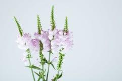 De tak van bloemen Royalty-vrije Stock Afbeeldingen