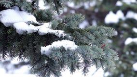 De tak van de bontboom met sneeuw stock video