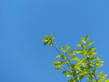 De tak van boom Stock Afbeelding