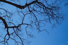 De tak van boom in tropisch Royalty-vrije Stock Afbeelding