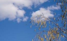 De tak van de berk op bewolkte hemel als achtergrond Royalty-vrije Stock Foto's