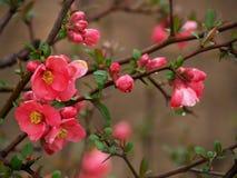 De tak van de bloem Stock Foto's