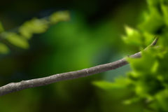 De tak van de boom royalty-vrije stock foto
