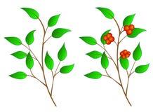 De tak van de boom met bessen vector illustratie