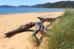 De tak van de boom op het strand Stock Afbeeldingen