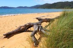 De tak van de boom op het strand Royalty-vrije Stock Fotografie