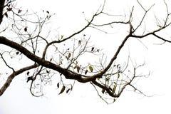 De tak van de dalingsboom Stock Foto's