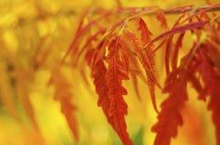 De tak van de de herfstboom Royalty-vrije Stock Fotografie