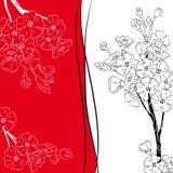 De tak van de de kersenbloesem van Japan Stock Afbeeldingen