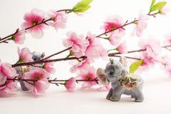 De tak van de kersenboom met bloemen over witte achtergrond Stock Foto