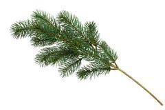De tak van de kerstboom Stock Afbeelding