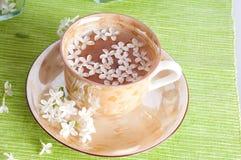 De tak van de kop thee en van de lente Royalty-vrije Stock Fotografie