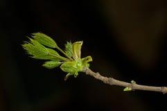 De tak van de lente Royalty-vrije Stock Afbeeldingen