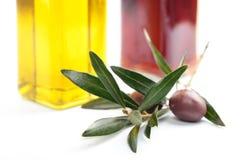 De tak van de olijf met fruit Royalty-vrije Stock Afbeeldingen
