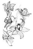 De tak van de orchidee Royalty-vrije Stock Foto's