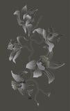 De tak van de orchidee op grijze achtergrond Stock Fotografie