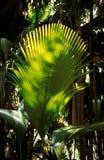 De tak van de palm Royalty-vrije Stock Afbeeldingen