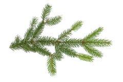 De Tak van de pijnboom Royalty-vrije Stock Afbeelding
