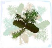 De tak van de pijnboom met strobiles Stock Foto's