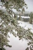 De tak van de pijnboom onder sneeuw royalty-vrije stock foto's