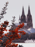 De tak van de rode lijsterbes op de achtergrond van de rivier Rijn, de Gotische kathedraal, Duitsland Stock Foto's