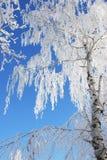 De tak van de sneeuw Stock Fotografie