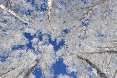 De tak van de sneeuw Stock Afbeelding
