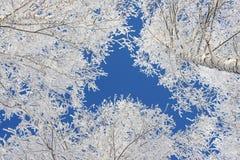 De tak van de sneeuw Stock Afbeeldingen