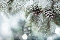 De tak van de spar op sneeuw Royalty-vrije Stock Foto