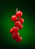 De tak van de tomaat met waterdalingen Stock Foto's