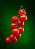 De tak van de tomaat met waterdalingen Stock Foto