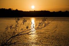 De tak van de wilg in zonsondergang Stock Foto