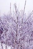 De tak van de winter stock fotografie