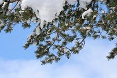 De tak van de winter royalty-vrije stock afbeeldingen